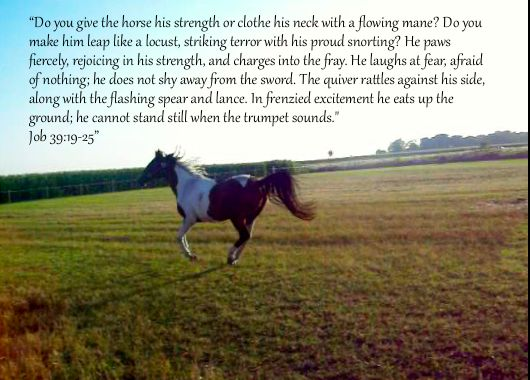 Secretariat quote with my horse Named Spark.