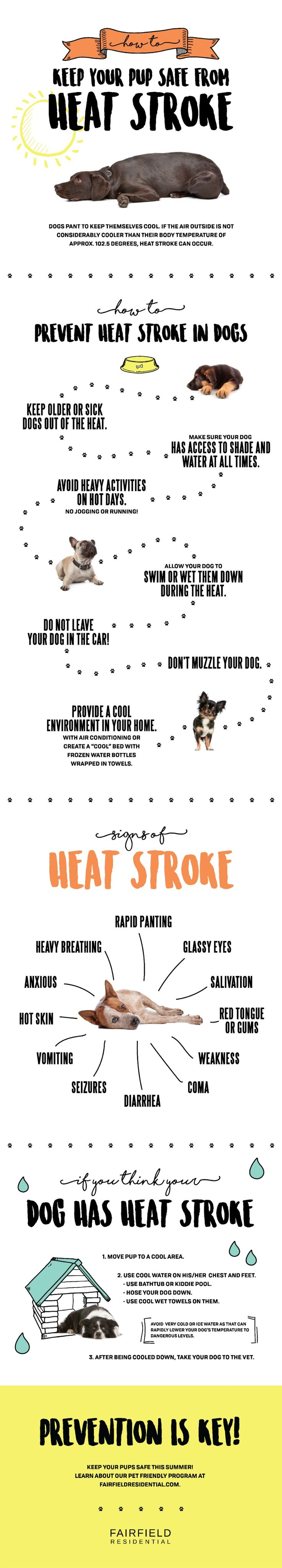 How To Prevent Heat Stoke in Dogs - Tap the pin for the most adorable pawtastic fur baby apparel! You'll love the dog clothes and cat clothes! <3