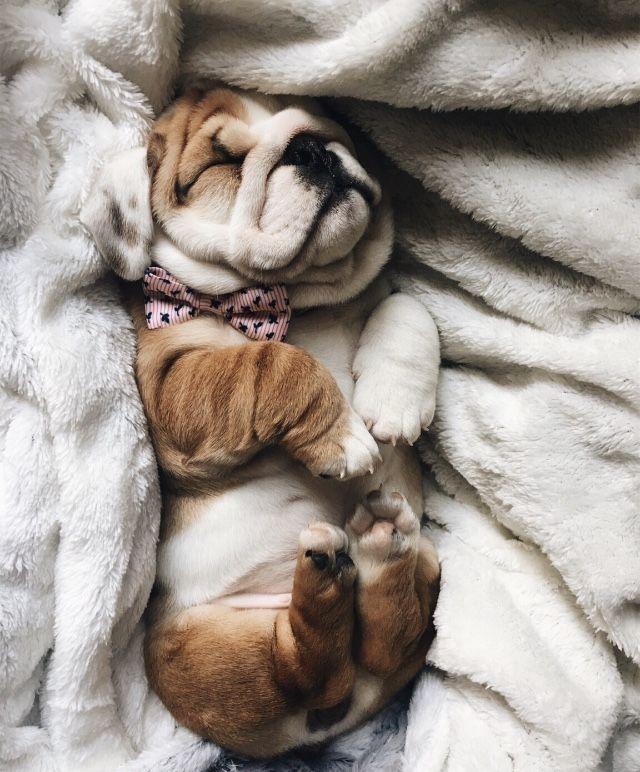 Pinterest Eydeirrac Cute Animals Puppies