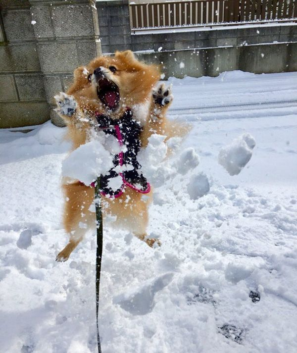 Dog S First Time In The Snow Cute And Funny Animal Pictures Of The Day Dogsfunnykids Funny Dog Videos Funny Dogs Dog Memes