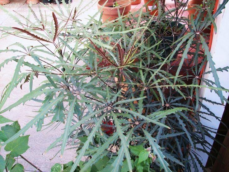Plants Poisonous Cats Palm