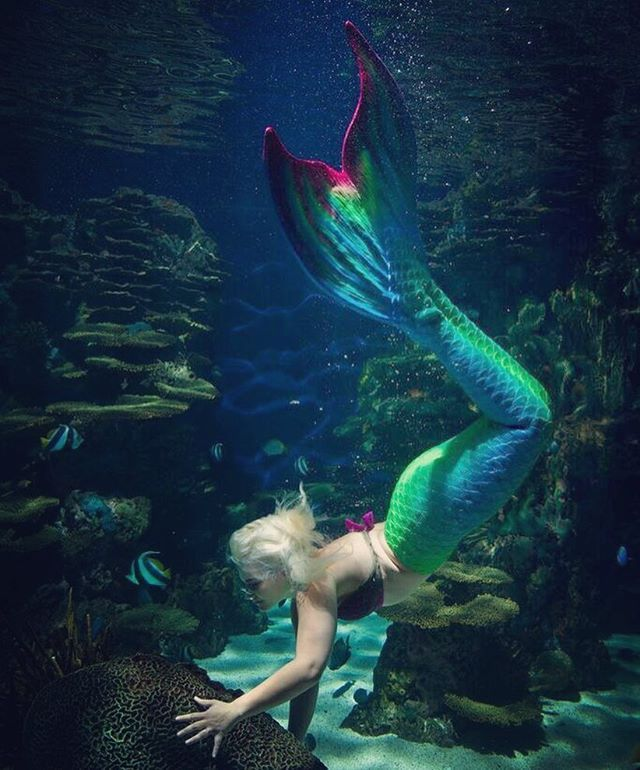 Stunning shot of Mermaid Luna @mermaidlunawyland in one of the several tails we have been lucky enough to provide for the beautiful mermaids of the Ripleys Aquariums #mernation #siliconetail #silicone #mermaids #mermaid #mermaidtail #aquarium #aquariummermaid #professionalmermaid 📷@dv8salons