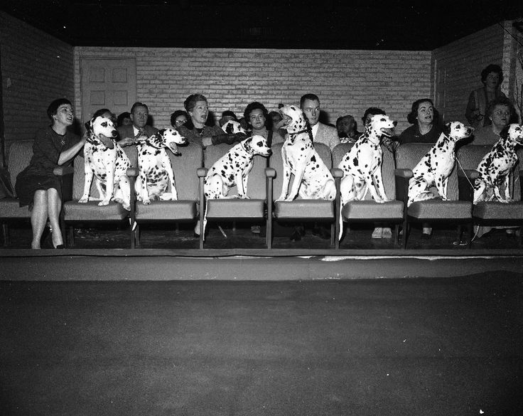 These dalmatians and their owners were treated to a special viewing of the newly released dalmatians movie on the floor screening room at the chicago