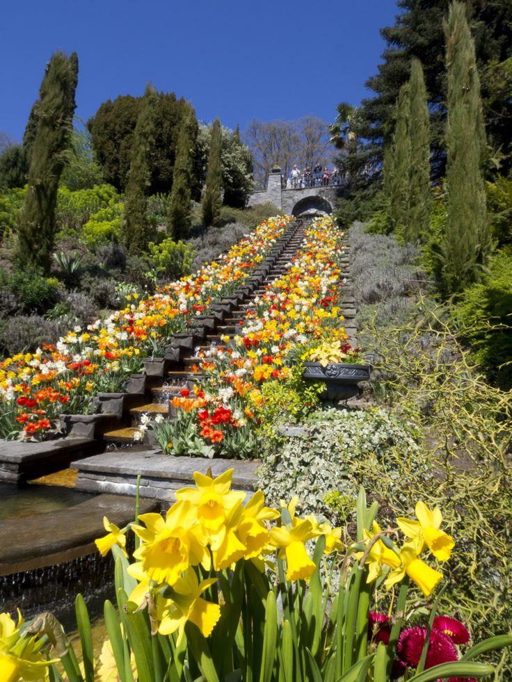 Insel Mainau im Bodensee • Blütenpracht •Lake Constanze  • Springtime