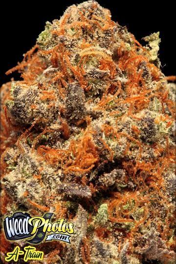 A Train Marijuana Strain Pictures