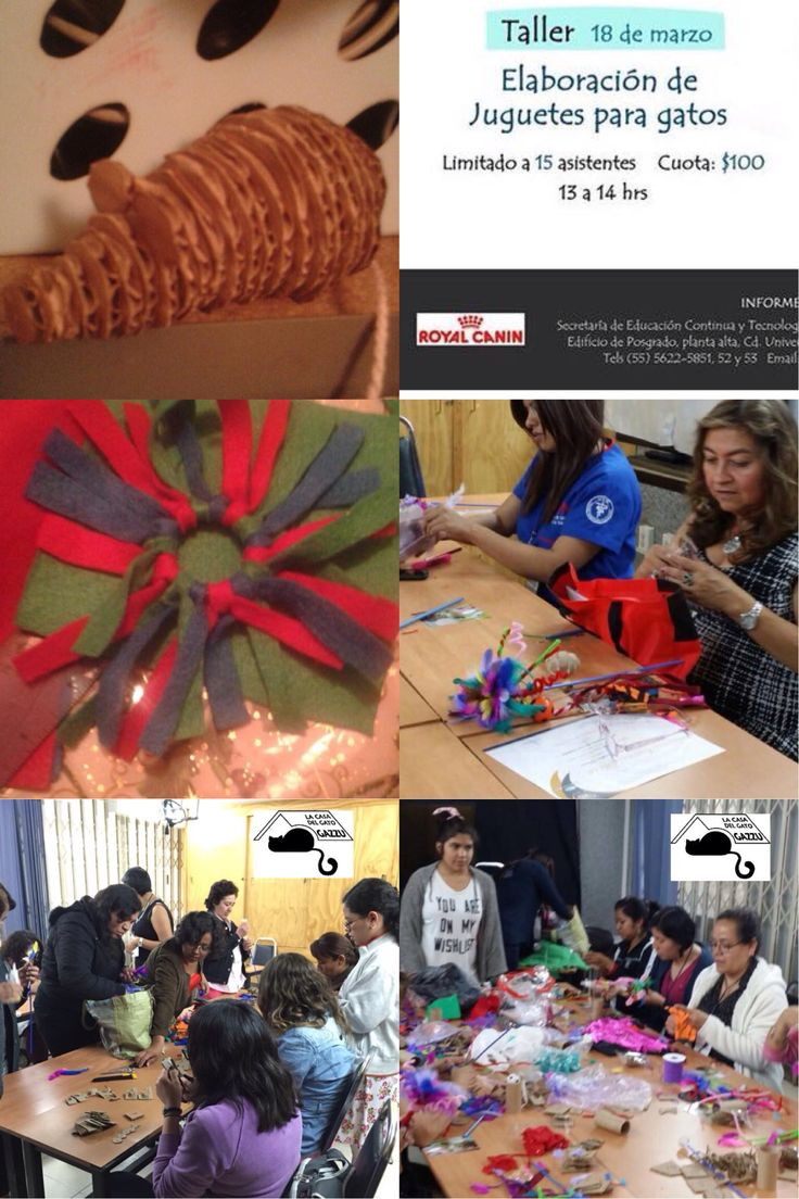Taller de elaboración de juguetes impartido por Gato Gazzu dentro del marco de la XI Semana de los Gatos, en la Fac de Veterinaria, uNam, CU. /si deseas que se imparta en tu escuela o quieres participar llama al 52080613