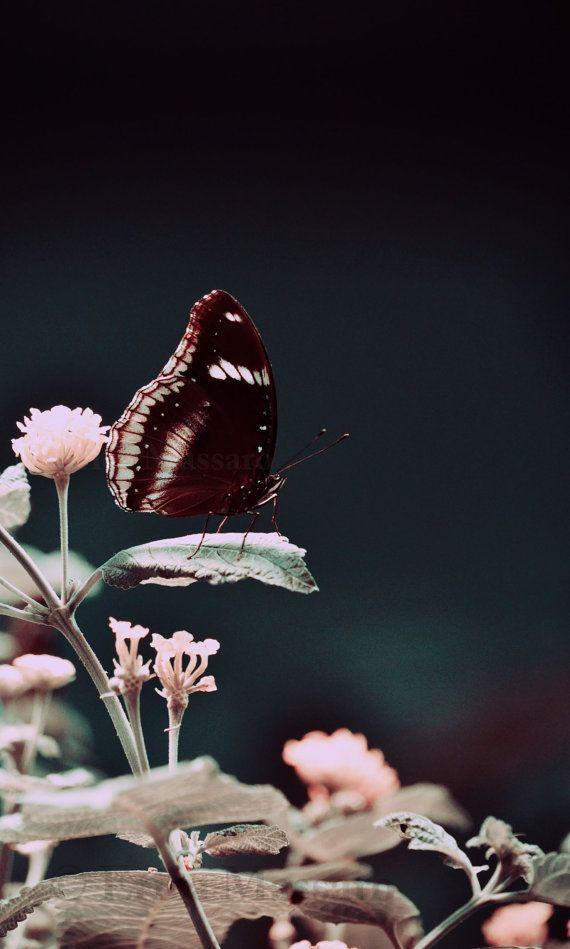 ☪ Fine Art Nature Photography | Butterfly Spring Print | Photography: EDMPrintedEphemera