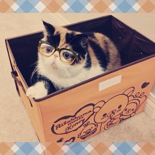 Cats Like Cardboard Boxes Ad