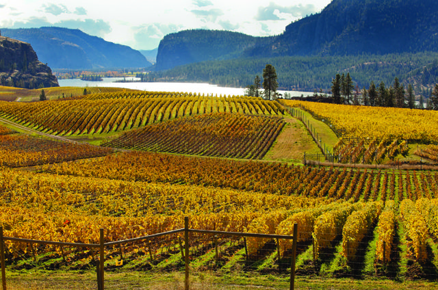 An overview of the wine industry in BC by Rupert Millar of The Drinks Business Magazine and some thoughts on the direction of its future by well known BC wine industry professionals. Quails' Gate Winery Mission Hill Winery Tantalus Vineyards Meyer Family Vineyards Summerhill Pyramid Winery CedarCreek Estate Winery