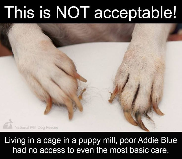 THIS IS NOT OK! PLEASE REPIN to show that puppy mill dogs do not even get the most basic care. #nomorepuppymills #rescue