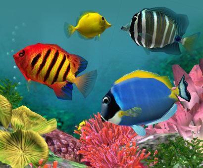 Les poissons tropicaux                                                                                                                                                                                 Plus