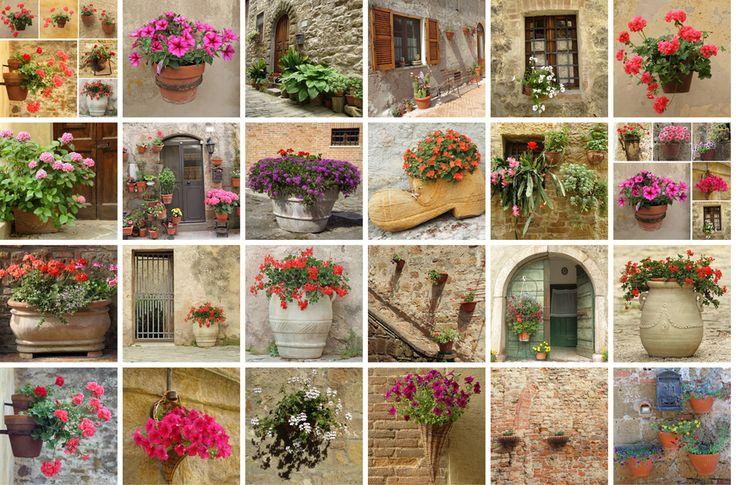 Virágkavalkád: ötletek, színek, virágok, cserepek