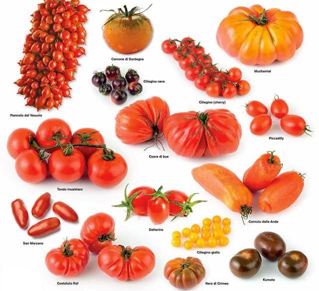 #Coltivare #pomodori in maniera #biologica