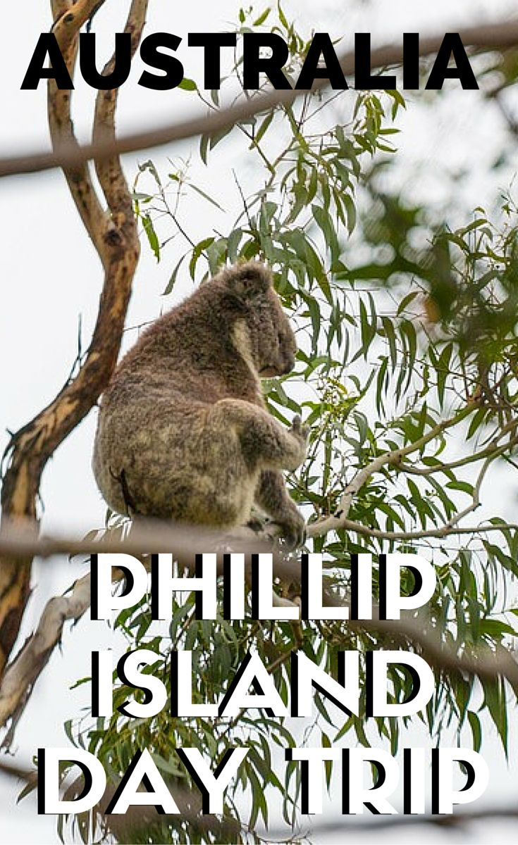 Located about 90 minutes southeast from Melbourne, Phillip Island is easily accessible by car. This island was surprisingly chocked full of things to do, and in 1 day we visited a heritage farm, koala conservation centre, seal sightseeing, and spotted the smallest penguins in the world.
