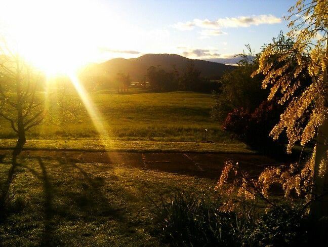 Spring Morning @ Ashgrove Tasmanian Farm