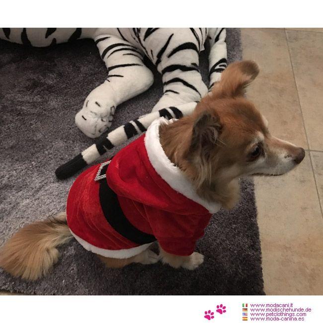Traje de Santa Claus para Perros #ModaCanina - Esto abrigo de Papà Noel para perro es una copia fiel del traje de Santa Claus: perfecto para perros pequeños, como Yorkshire, Chihuahua y Maltés.