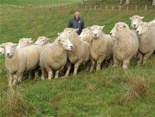 A Look At The Characteristics Of Sheep | Livestock Farming For Beginners