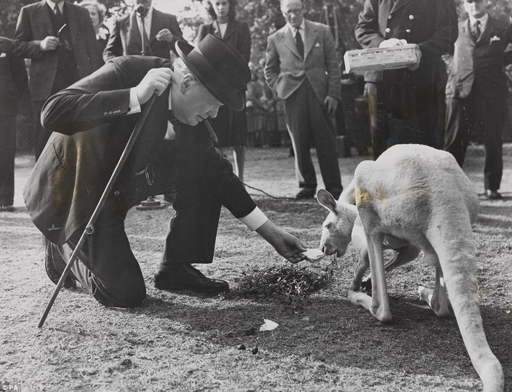 Post-war: Sir Winston meets a kangaroo called Digger at London Zoo on September 10, 1947. ...