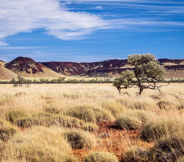 Pilbara cattle country  #gushagoeswalkabout #pilbara #exploreaustralia #canonaustralia #wow_australia #ig_australia