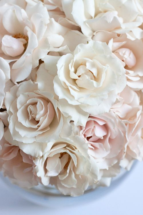 White Majolica...spray roses would be lovely mixed with other ingredients for the button holes