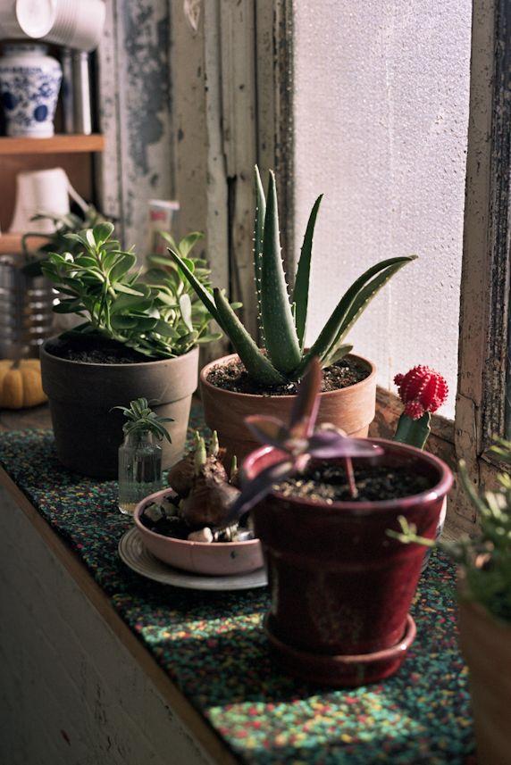 plants in my studio; shot by soohang lee