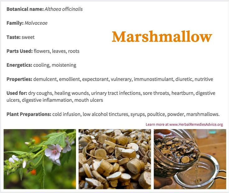 Like many of the herbs still in use today, marshmallow herb has a long history of use, going back at least 2,000 years, though most probably even more than this. Most herbalists use marshmallow root for medicine today, but the leaves and flowers are also very viable.  The genus name for marshmallow herb is derived from the Greek word altho, which means to cure. This gives us a great indication of how highly regarded this plant was in ancient times.