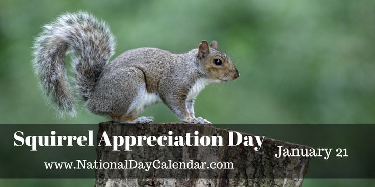 SQUIRREL APPRECIATION DAY  Squirrel Appreciation Daywas created by Christy Hargrove from Asheville, North Carolina on January 21, 2001. Christy is a wildlife rehabilitator in North Carolina,...