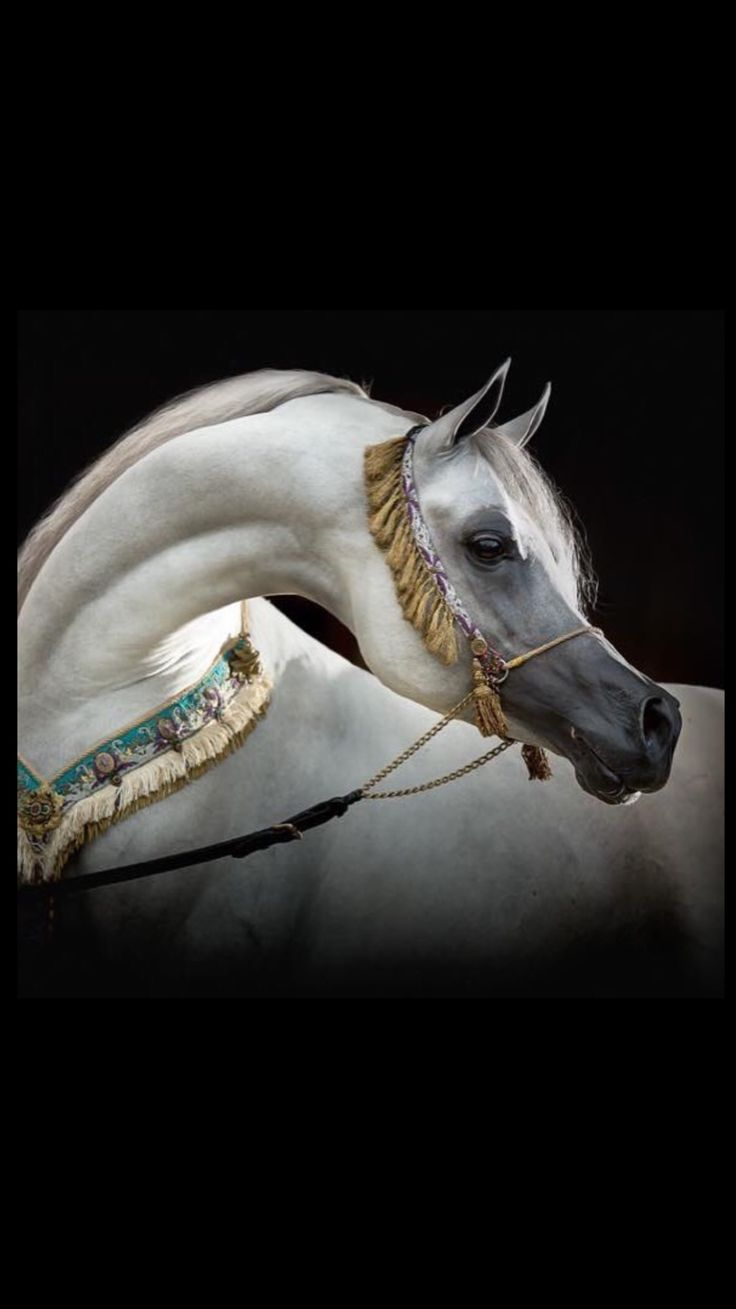 Horse photography - Arabian  horse                                                                                                                                                                                 More