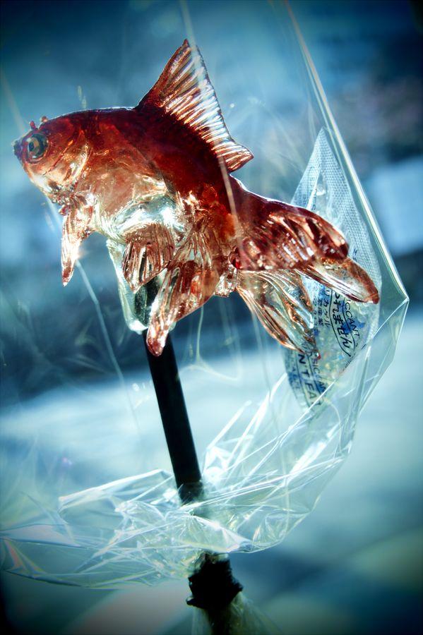 こないだの飴細工屋さんに飾ってあった金魚の飴!ガラス細工みたいで綺麗だった