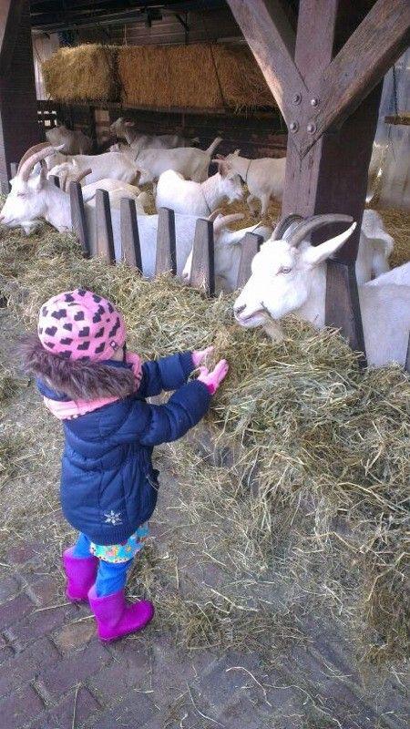 Low budget dagje uit: geitenboerderij Ridammerhoeve in het Amsterdamse Bos.