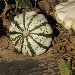 Tombées en désuétude, les courges signent leur grand retour. Cultivée sous toutes les latitudes et en toute saison depuis des millénaires, la grande famille des cucurbitacées comptabilise plus de 800 variétés. Des légumes qui se cuisinent à l'envi du…