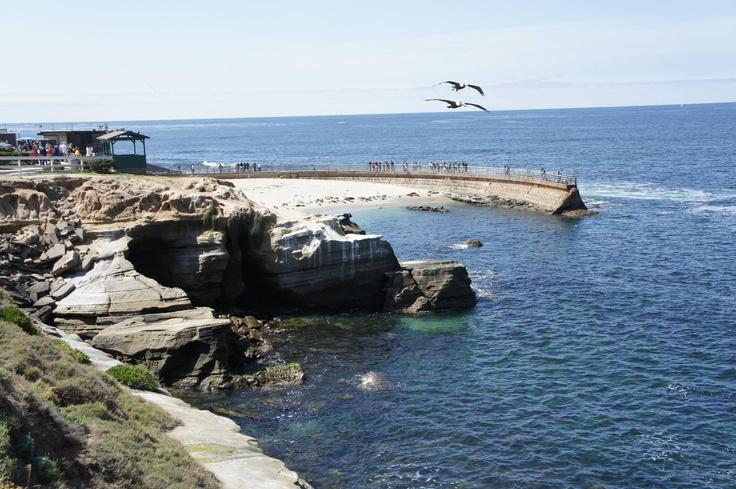 Sea Lion bay San Diego
