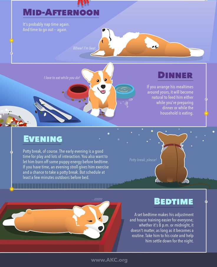 Developing a routine is a great way to help your new puppy adjust to his new home, and we're here to help. Read on for more tips and helpful information on setting a schedule for your pup!