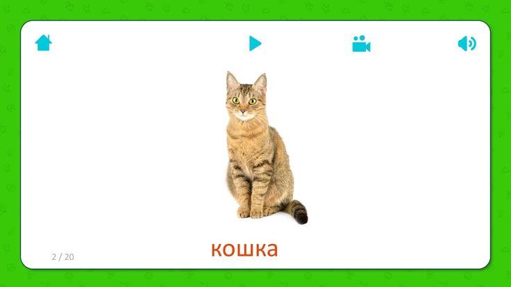 Карточки для детей - Кошка (Cat) - Домашние животные. Бесплатная установка приложения для iOS и Android: http://onelink.to/flashcardsforkid