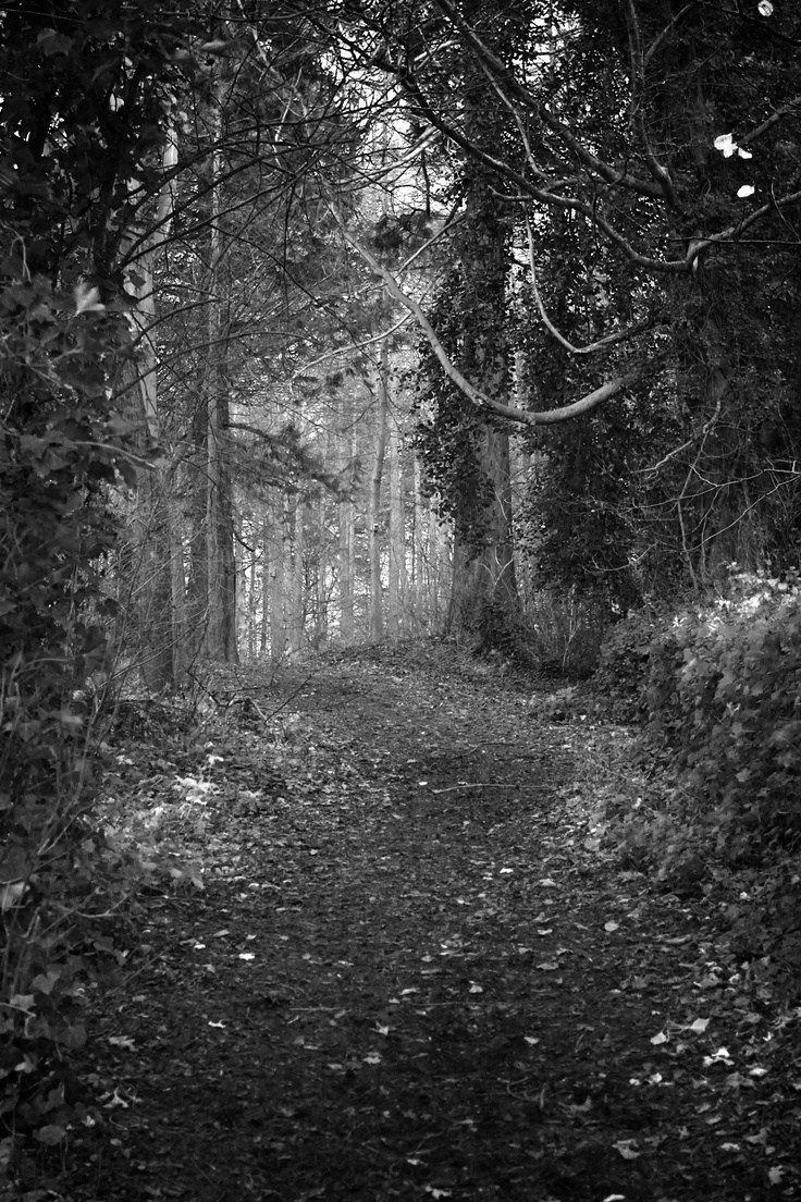 Dare you enter the woods? Photo, My photos