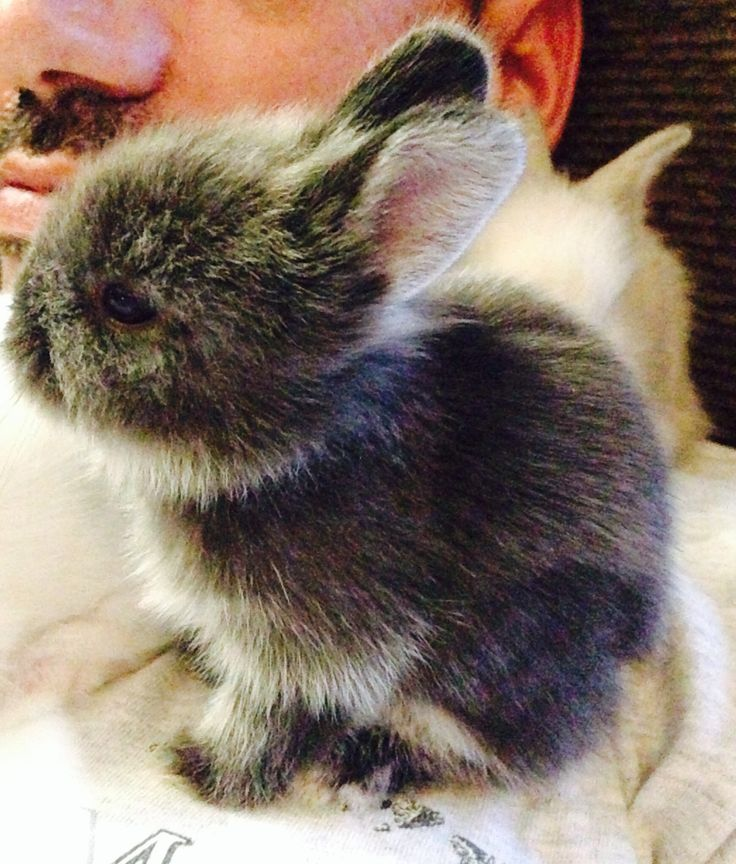 how to care for baby lionhead bunnies