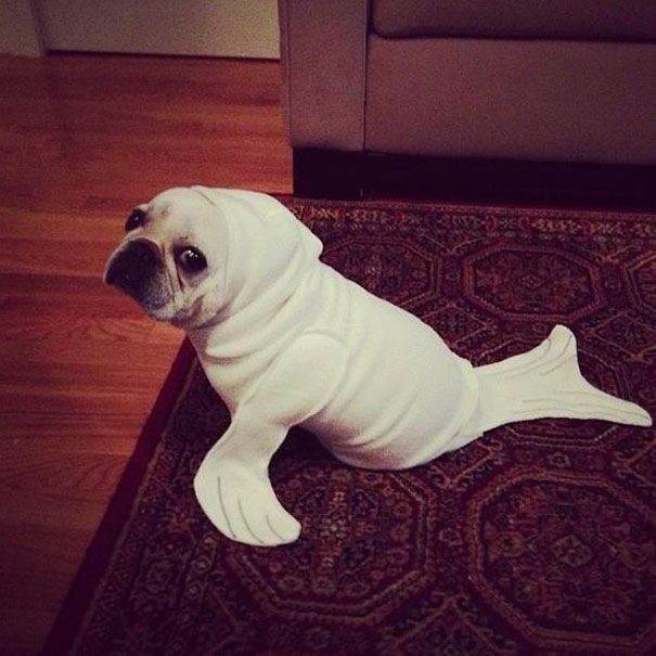 20+ Terrifyingly Pawsome Halloween Costumes For Dogs | Bored Panda