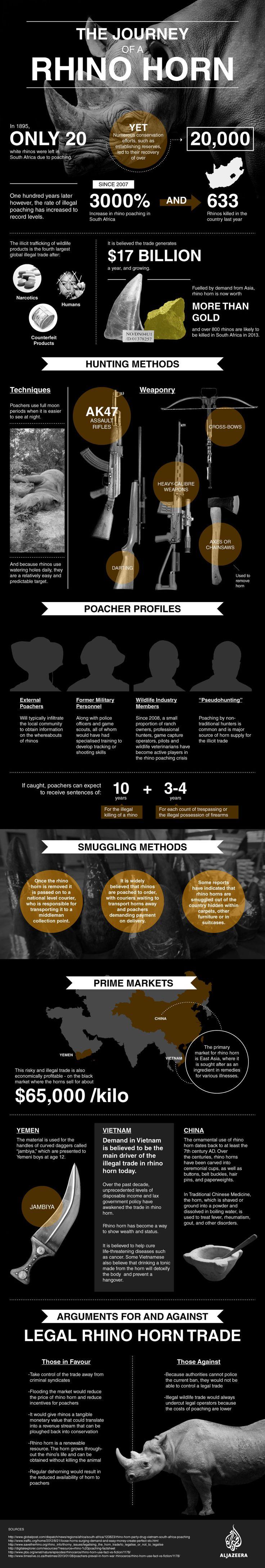 Rhino horn info-graphic