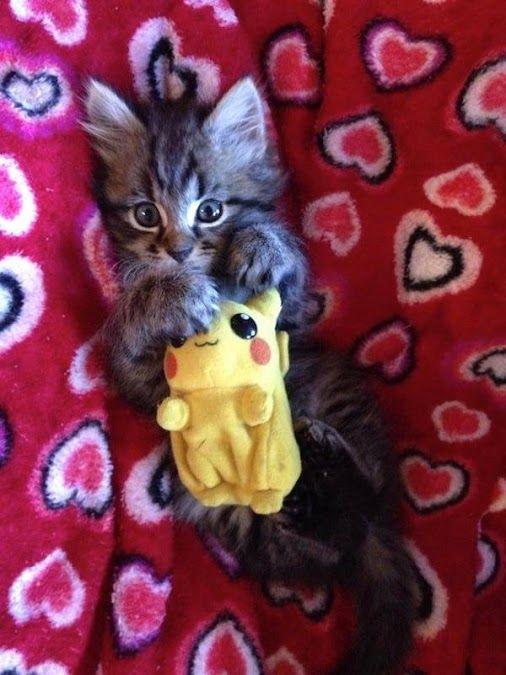 Pikachu Cat!                                                                                                                                                                                 More