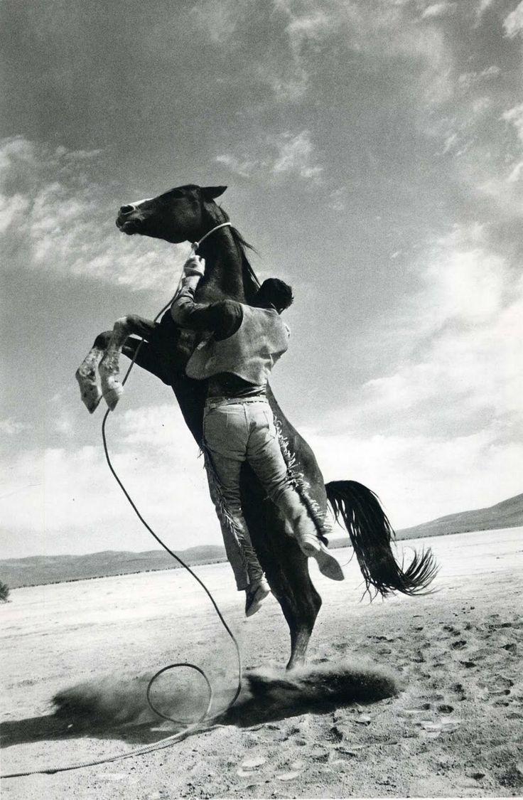 Wild Horse by Ernst Haas