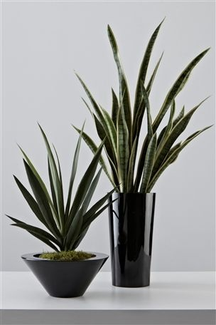 Buy Yucca Plant from the Next UK online shop Bathroom:
