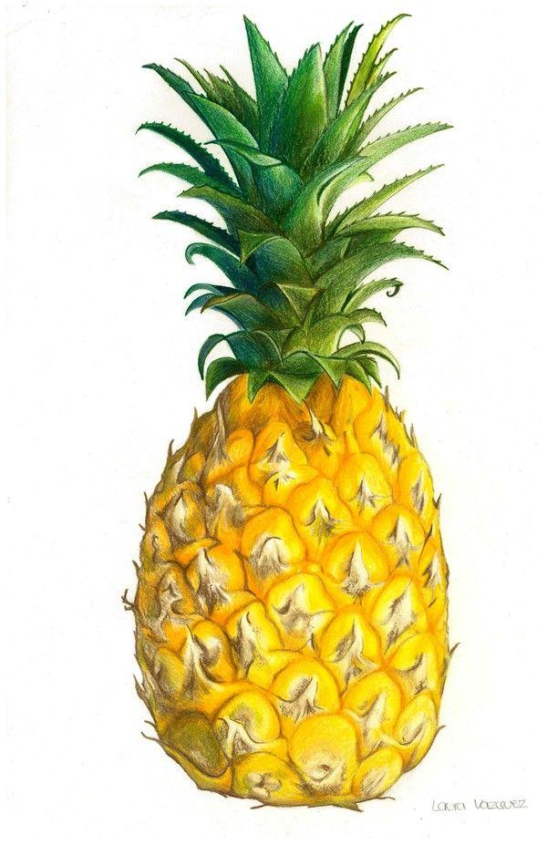 Best 25 Pineapple Illustration Ideas On Pinterest
