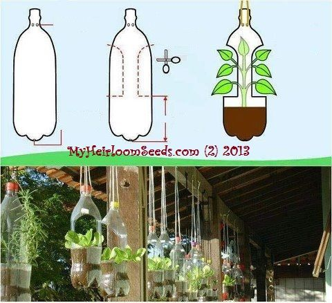 reuse bottles and plant your veggies in them