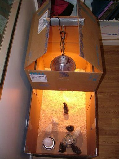 Homemade Baby Chick Feeder Brooder For Baby Chickens