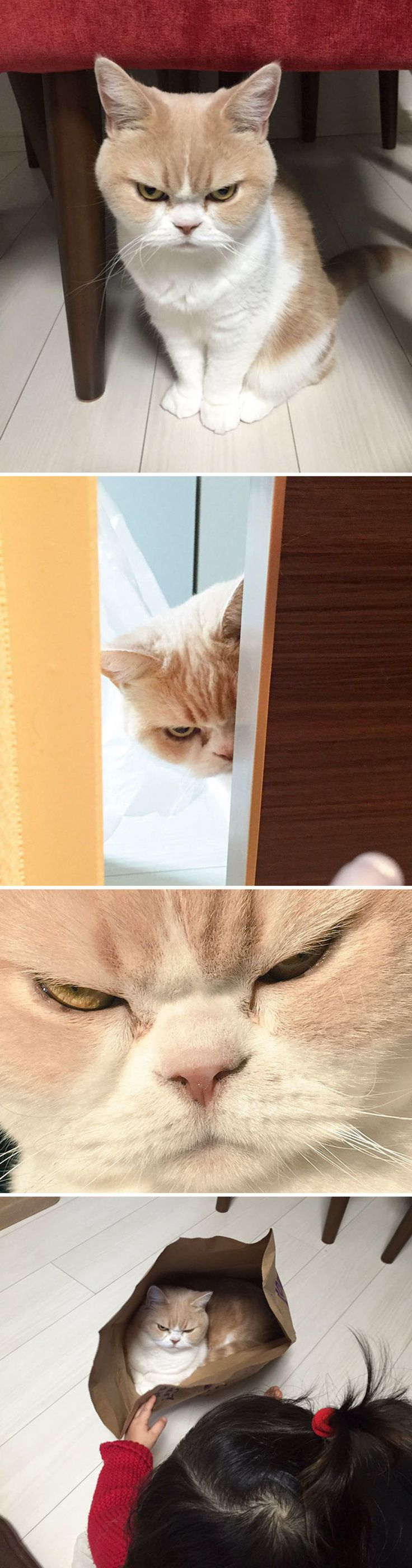 Die Besten Fed Up With Ideen Auf Pinterest Wutkunst Comic - 17 cats that are angry grumpy and fed up with everything