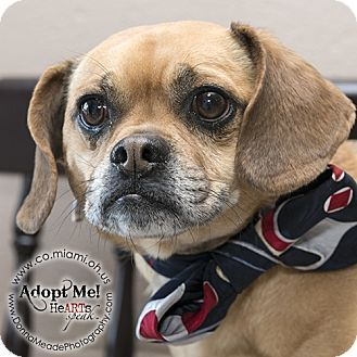 URGENT!  I am at a kill shelter in Troy, OH - Pug/Beagle Mix. Meet Rosco a Dog for Adoption.