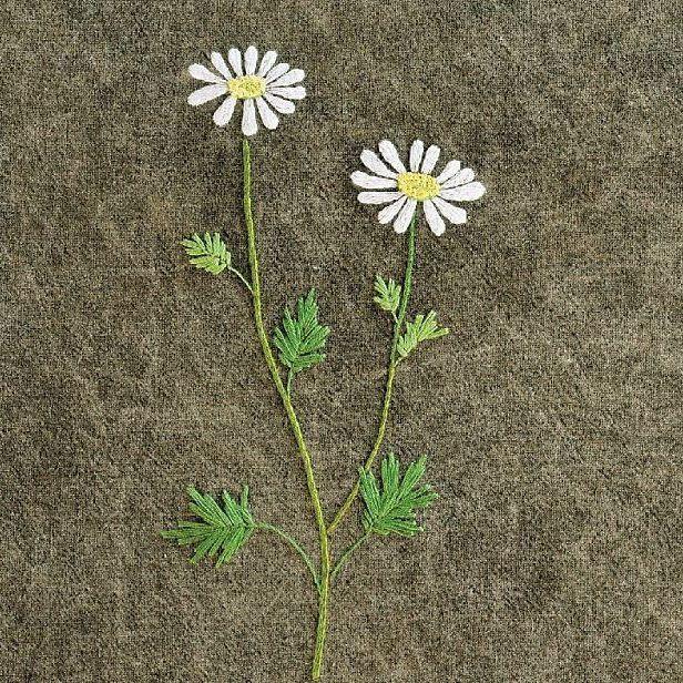 #야생화자수 #한라구절초 #구절초 #꿈소 #꿈을짓는바느질공작소  #자수 #자수타그램 #embroidery #handembroidery #embroideryart #threadpainting #needlepainting #stitchart #wildflowers #dendranthema #chrysanthemum #handmade