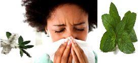 Nez bouché : Solutions express avec les huiles essentielles