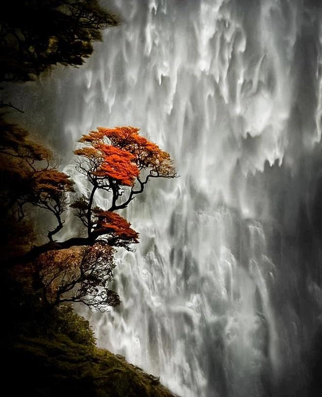 Devil's Punch bowl Falls, New Zealand. #waterfalls #trees #photography