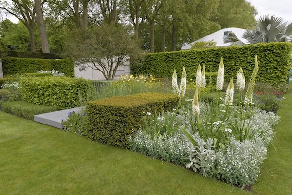 The attractive cubes of #hedging featured in The Telegraph's Garden are created using #Yew and #Hornbeam hedge #plants.